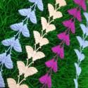 Motylek duży